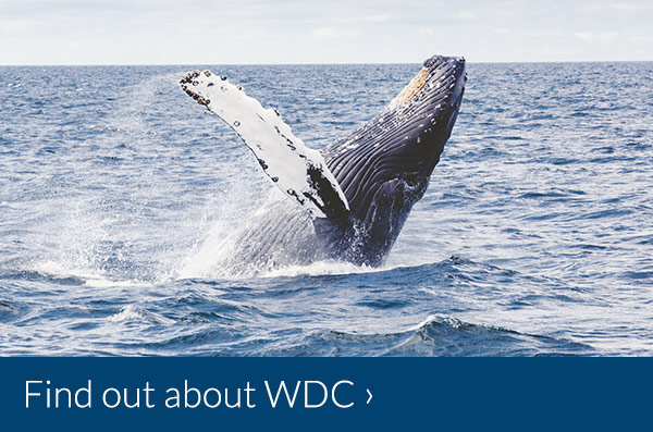 Find out more about Whale & Dolphin Conservation (WDC)