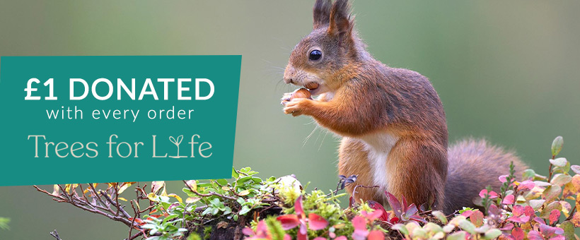 £1 donated to Trees for Life with every order