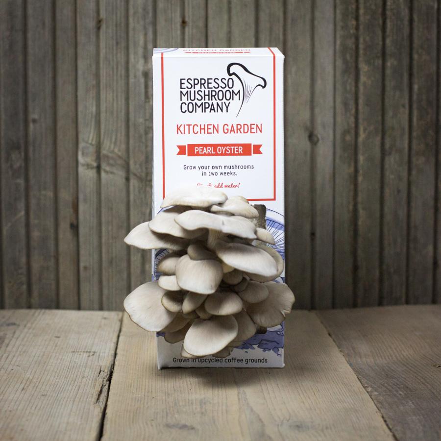 Kitchen Garden Mushrooms Espresso Mushroom Company Grow Your Own Kitchen Garden Espresso