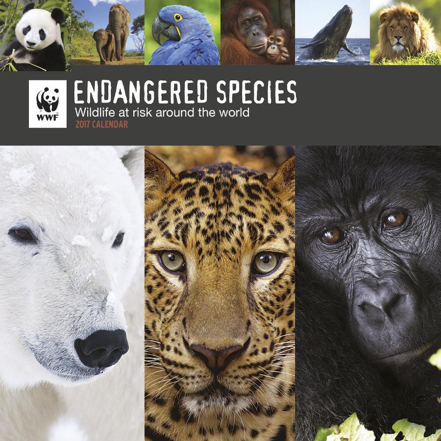 Wwf Calendar 2017 Wwf Ethical Superstore