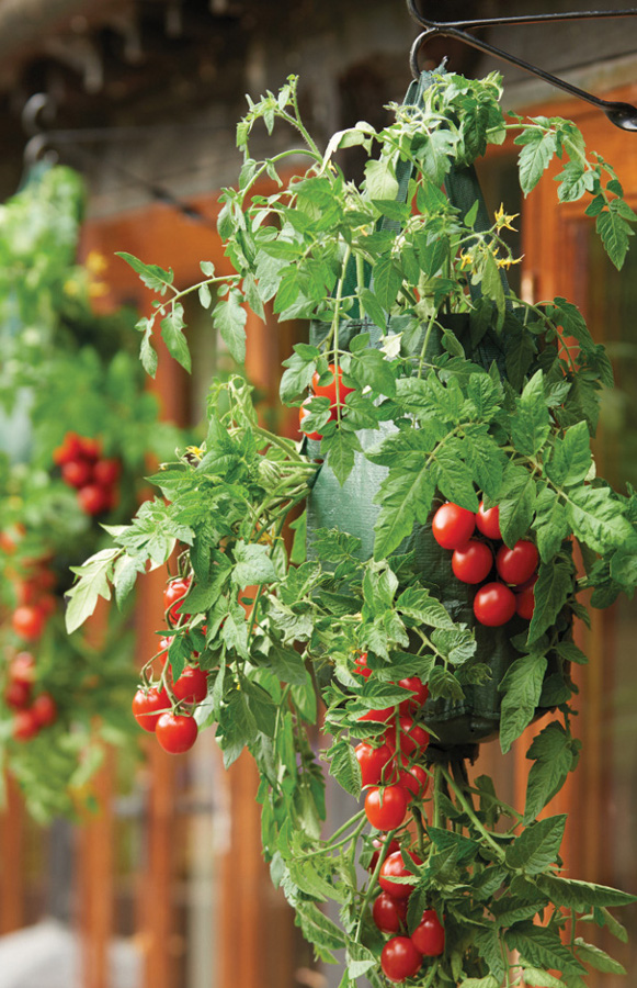 Hanging Tomato Planters Gardman Ethical Superstore