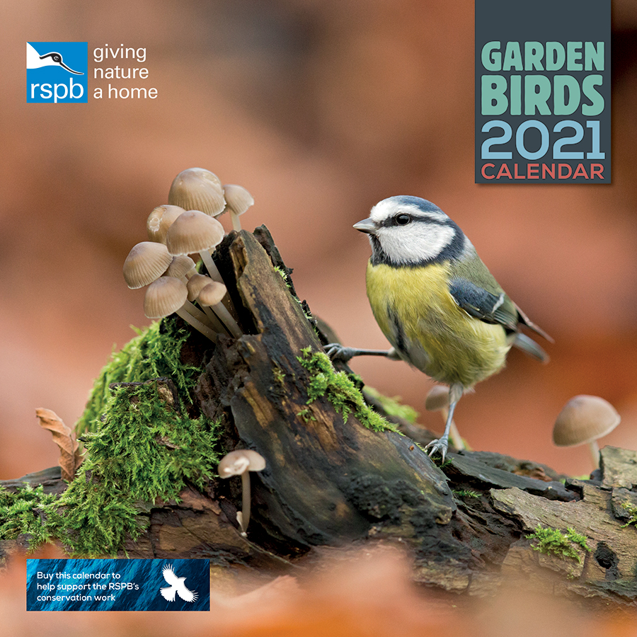 Sparrows 2021