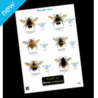 Field Guide - Bees