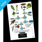 Field Guide - Bugs