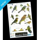 Field Guide - Birds