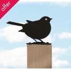 Nether Wallop Garden Bird - Robin