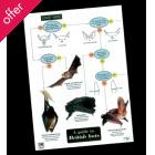 Field Guide - Bats
