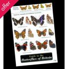 Field Guide - Butterflies