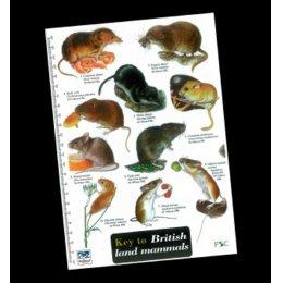 Field Guide - Mammals