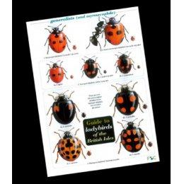 Field Guide - Ladybirds