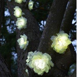 Smart Solar White Roses String Lights - 10