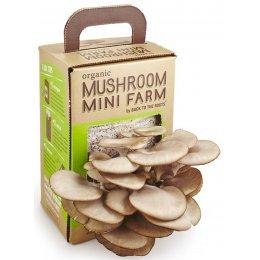 Mini Mushroom Farm test