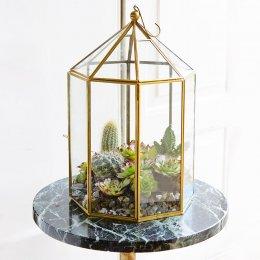 Brass Terrarium