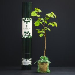 The Present Tree Truffle Tree Gift