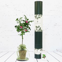 The Present Tree Wild Rose Tree Gift