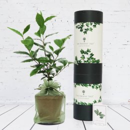 The Present Tree Organic Tea Plant Gift