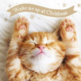 Wake Me Up Charity Christmas Cards - Pack of 10