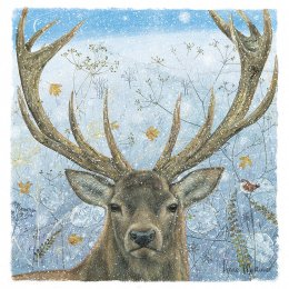 RSPB Winter Stag Christmas Cards - Pack of 10