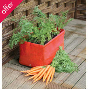 Carrot Patio Planters - Pack of 2