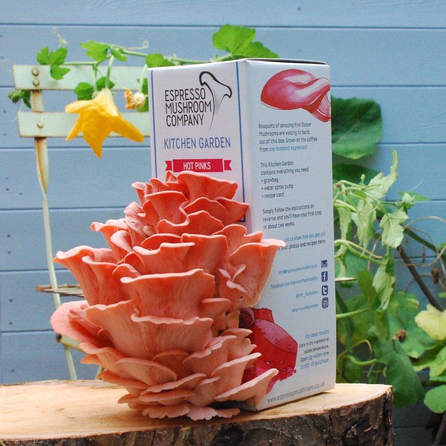 Kitchen Garden Mushrooms Espresso Mushroom Company Hot Pink Grow Your Own Kitchen Garden