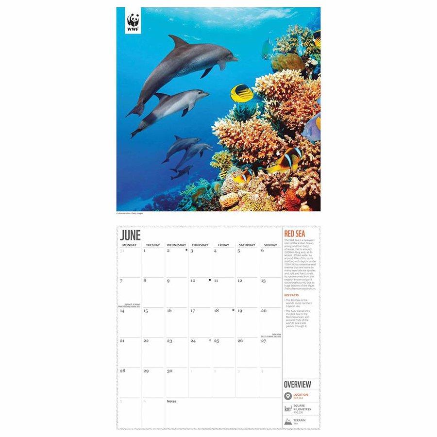 WWF Fragile Earth 2021 Wall Calendar - WWF